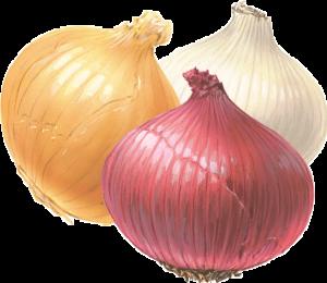 Photo-onion